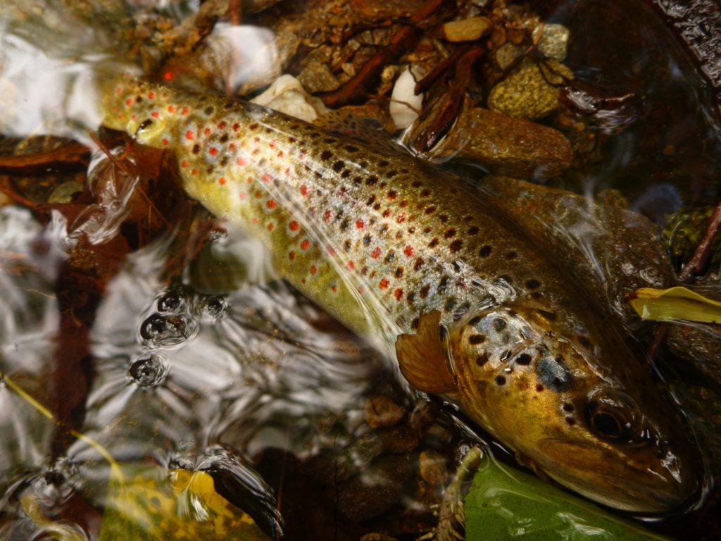 Pêche de Mai 2015 Scodavolpe 17