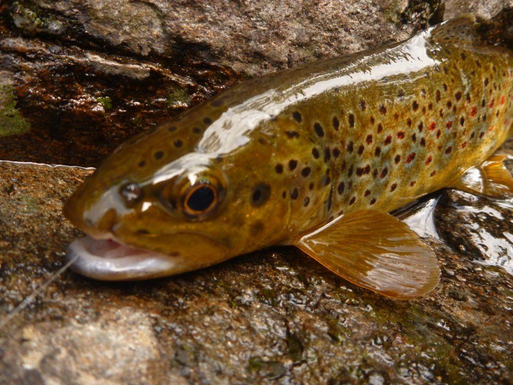 Pêche de Mai 2015 Scodavolpe 18