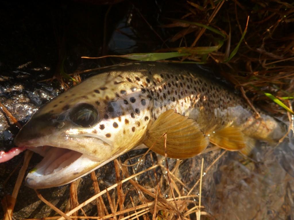 Pêche-de-la-truite-en-Juin-Scoda.2-1024x768